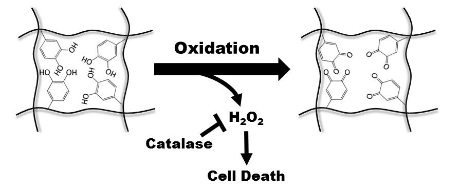 H2O2 generation